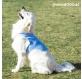 chaleco-refrescante-para-mascotas-grandes-innovagoods-l.jpg