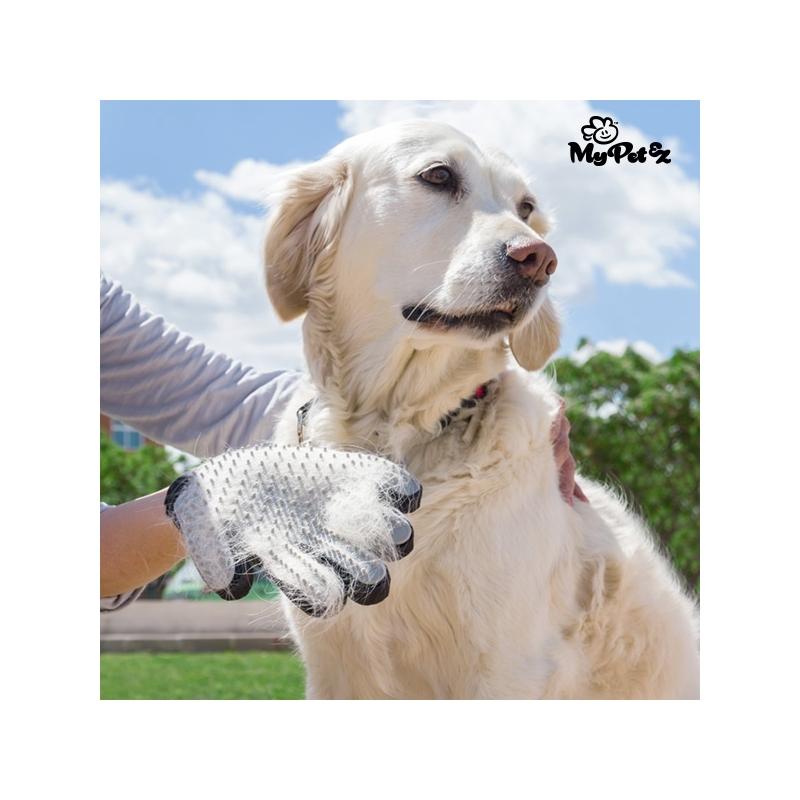My Pet Petter kinnas-hari koertele