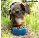 kaks-uhes-pudel-vee-ja-toiduanumatega-lemmikloomadele-pettap-innovagoods_135351 (2).jpg