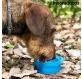kaks-uhes-pudel-vee-ja-toiduanumatega-lemmikloomadele-pettap-innovagoods_135351 (3).jpg